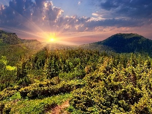 Mountains, Path, Sunrise, woods