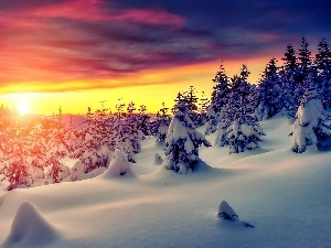 trees, winter, Great Sunsets, Spruces, viewes, snow