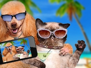 Telephone, Glasses, cat, Selfie, poodle