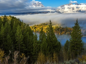 trees, autumn, Spruces, viewes, landscape, The United States, State of Wyoming, Mountains, forest, Grand Teton National Park, Fog
