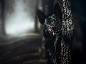Black, forest, trees, German Shepherd