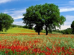 trees, viewes, Flowers, papavers, Meadow