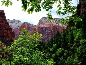 trees, viewes, canyon, forest, Mountains