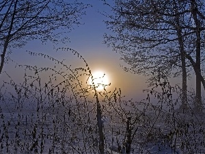 trees, viewes, sun, winter, west