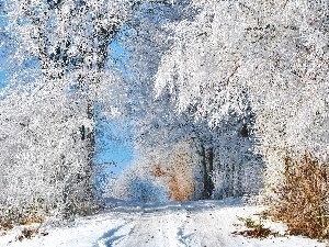 trees, viewes, Way, frosty, winter