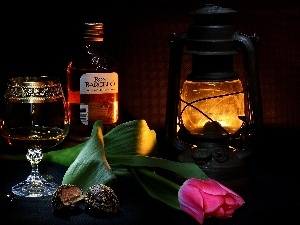 composition, Lamp, tulip, alcohol