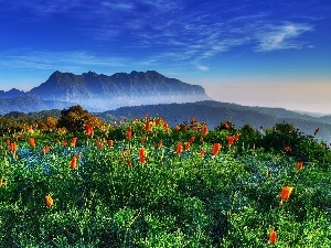 Tulips, Mountains, forest