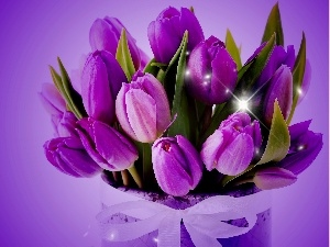 tulips, bouquet, violet