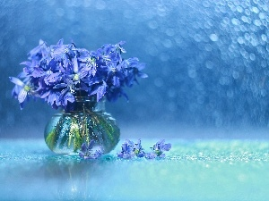 Flowers, Siberian squill, Bokeh, decoration, vase, Blue