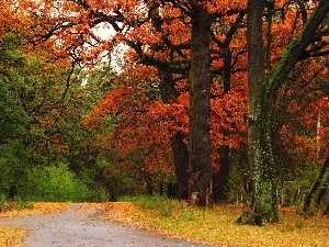 viewes, Alleys, Park, trees, autumn