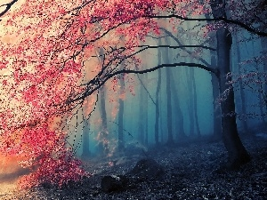 viewes, autumn, Fog, trees, forest