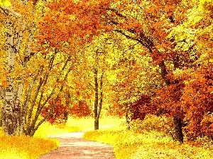 color, Park, viewes, autumn, trees, lane