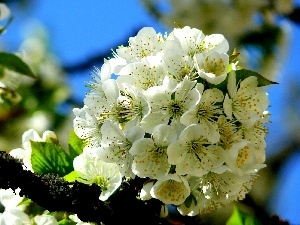 viewes, fruit, Flowers, trees, White