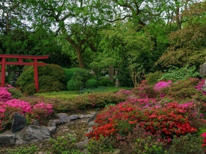 stream, Rhododendron, trees, viewes, Japanese Garden