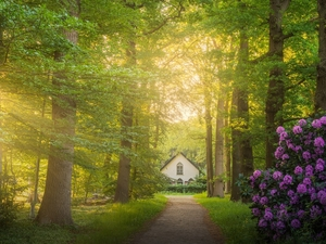 viewes, Way, Bush, trees, rays of the Sun, house, rhododendron