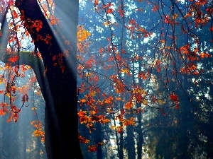 rays of the Sun, viewes, Leaf, trees