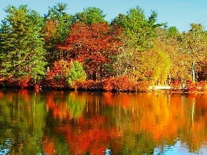 trees, Colours, River, autumn, color, viewes, reflection