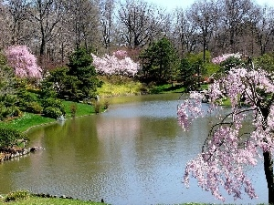 flourishing, Park, viewes, Spring, trees, River