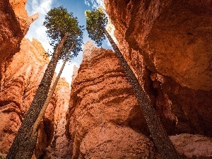 viewes, canyon, trees