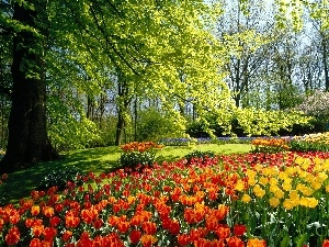 viewes, Tulips, Park, trees, Netherlands