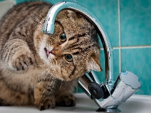 water, play, Bathroom, tap, kitten