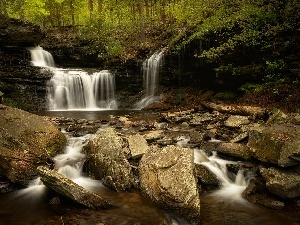 forest, Stones, waterfall, River