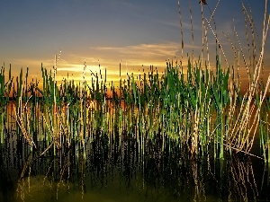 west, grass, lake