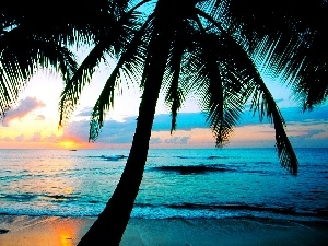 west, sun, Beaches, Palms, sea