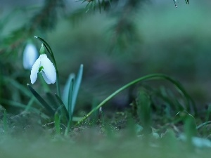 Colourfull Flowers, Snowdrop, White