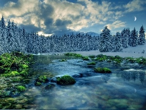 winter, River, forest