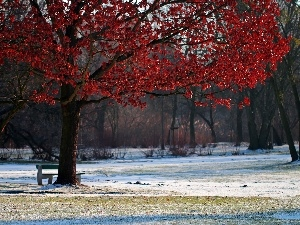 winter, Park, Red, Leaf, trees
