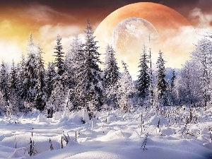 Spruces, Planet, winter, snow