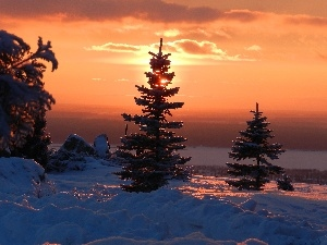 west, Spruces, winter, sun