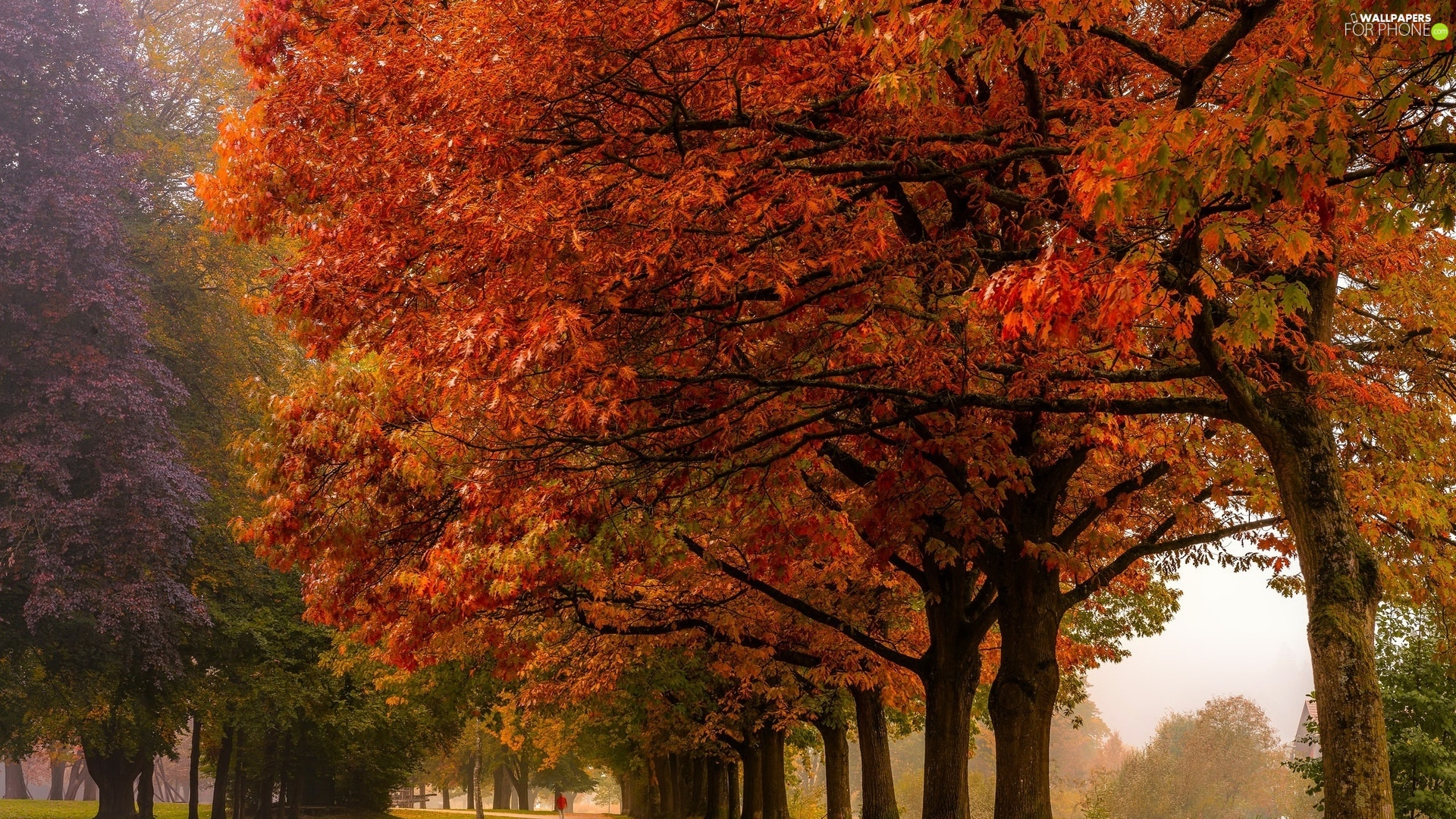 viewes, autumn, alley, trees, Park