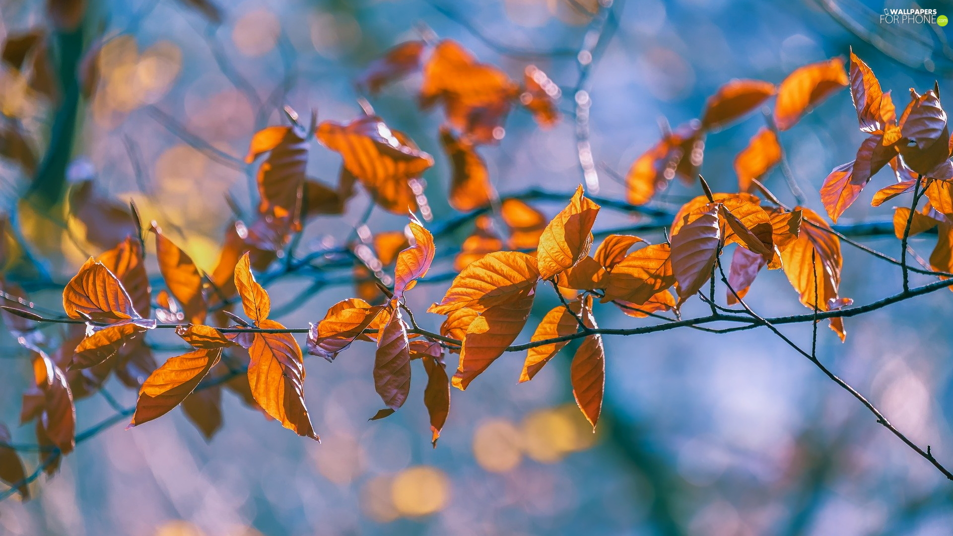 twig, Yellowed, Leaf, Autumn