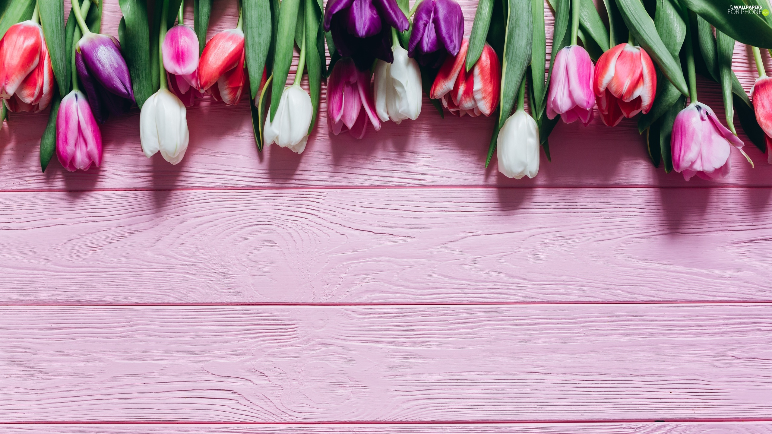 Pink, boarding, color, Tulips, Flowers