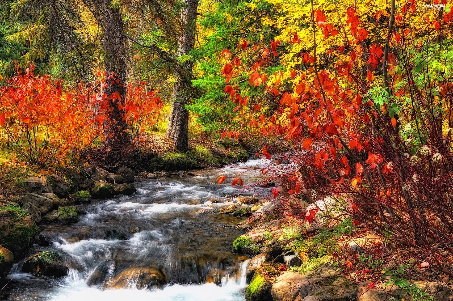 trees, forest, Bush, autumn, viewes, River