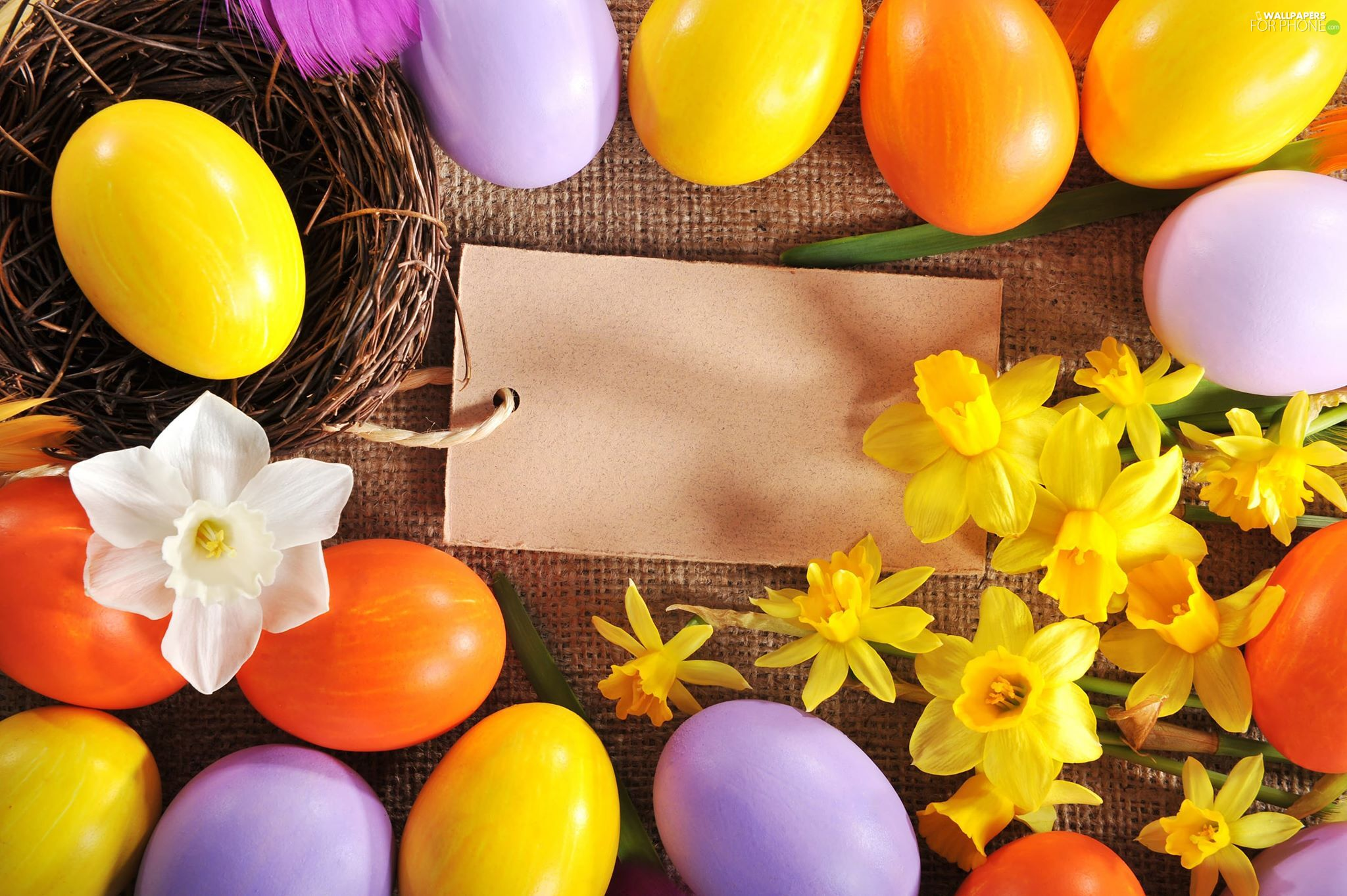 Daffodils, chit, eggs, nest, Easter