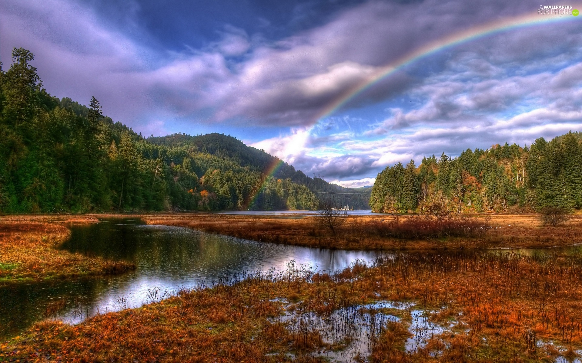 clouds, Great Rainbows, marshland, woods, River
