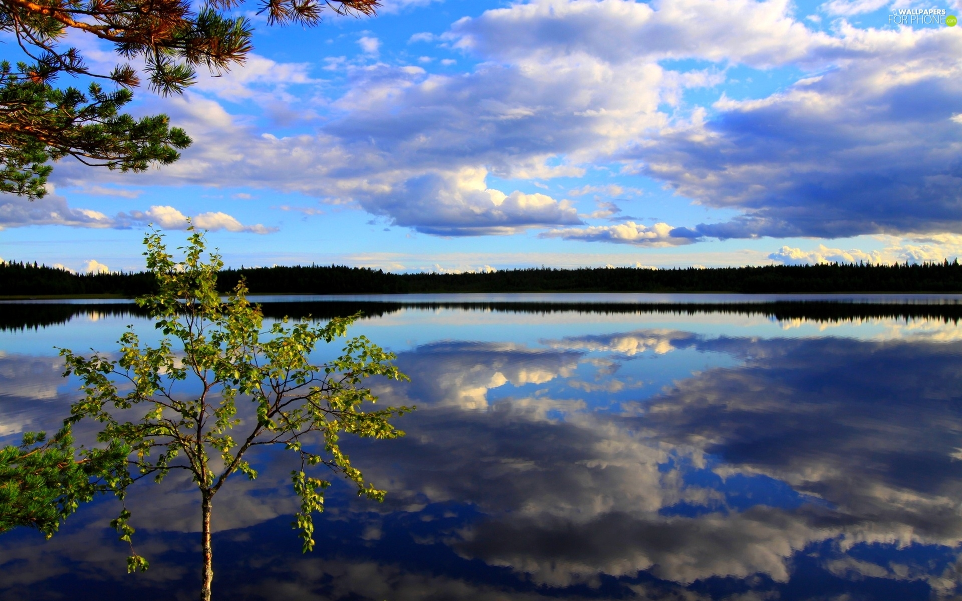 trees, Huge, clouds, reflection, viewes, lake