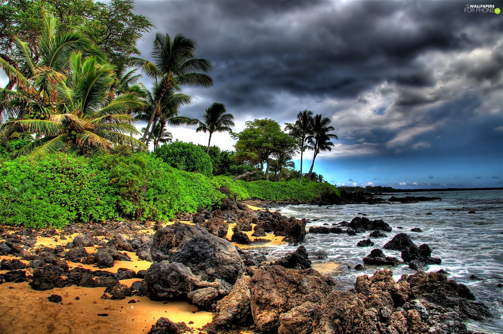 Coast, sea, Palms