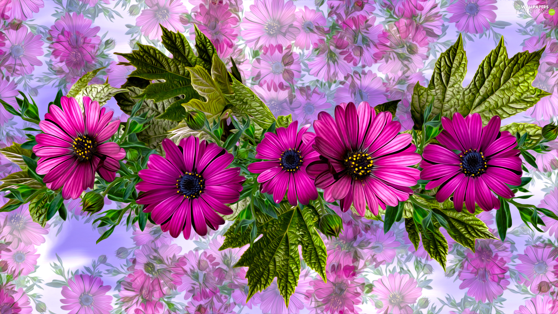 graphics, Flowers, African Daisy