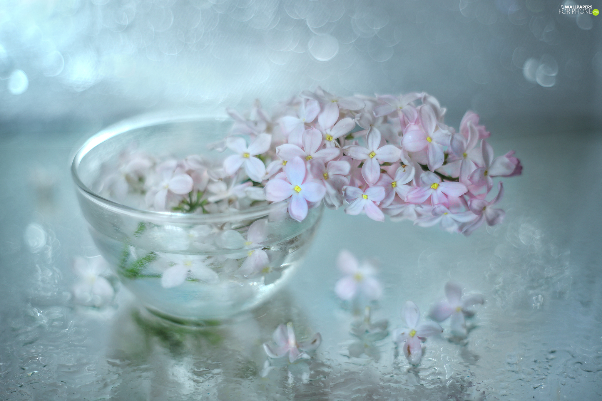 glass, dish, without, Flowers, Pink