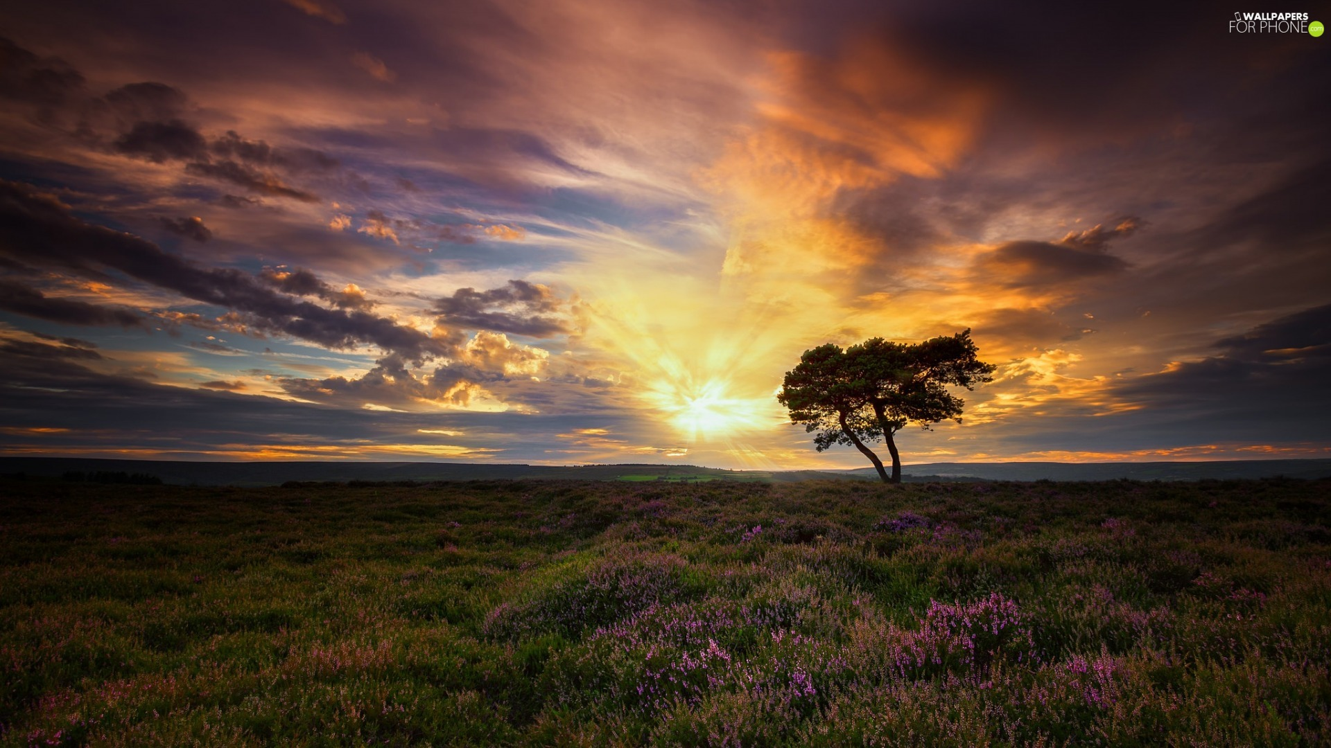 heath, North Yorkshire County, Great Sunsets, Egton, England, trees, clouds