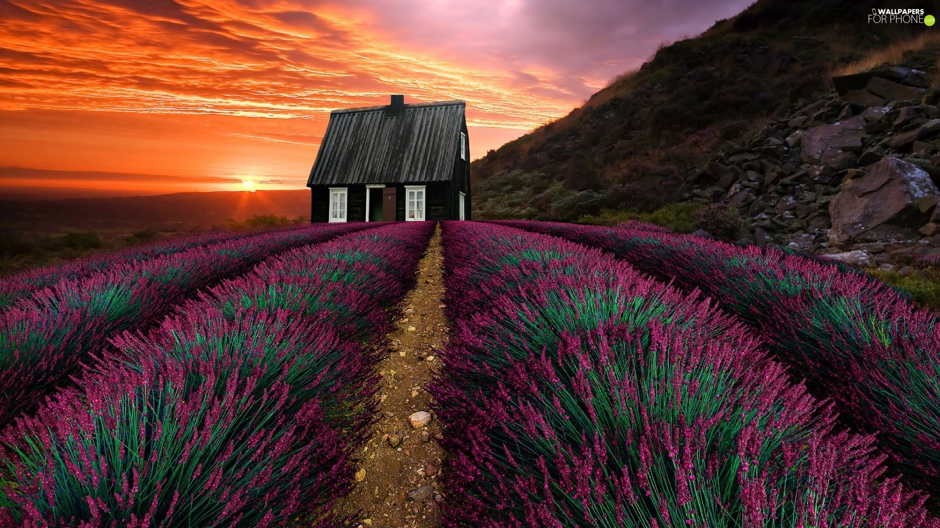 Hill, Great Sunsets, Field, lavender, house