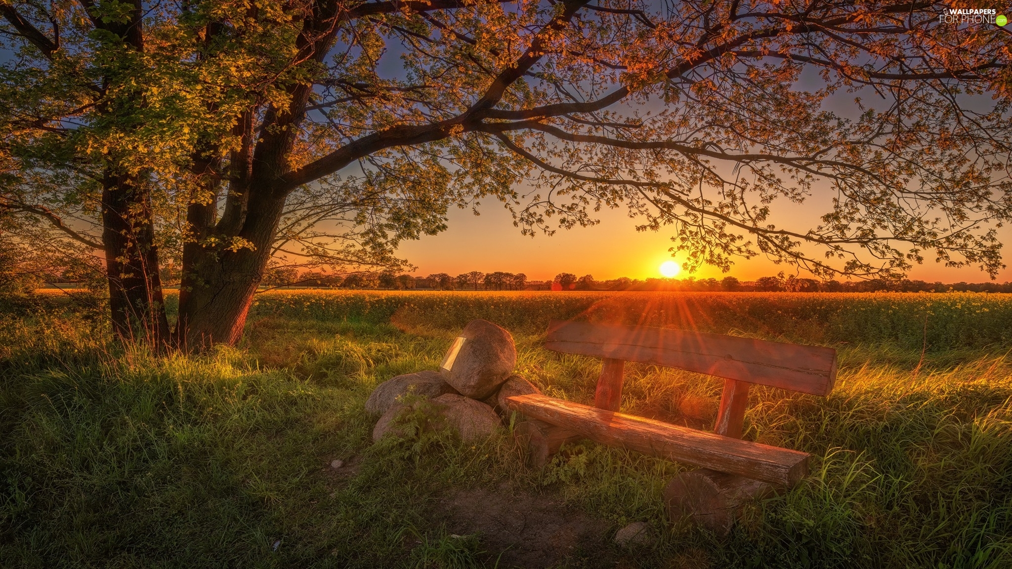 viewes, Bench, Stones, Field, Sunrise, trees