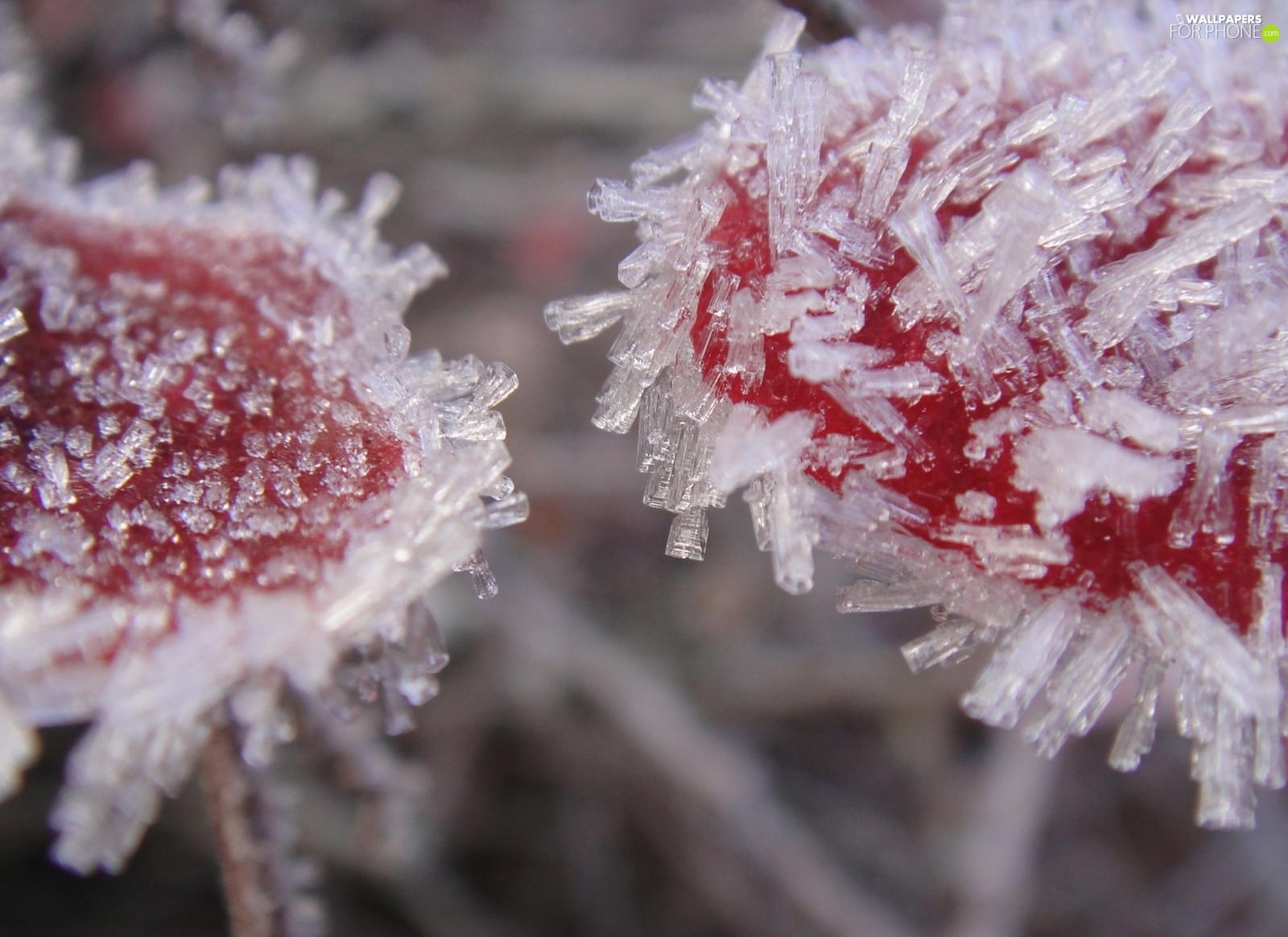 White frost, Red, flakes
