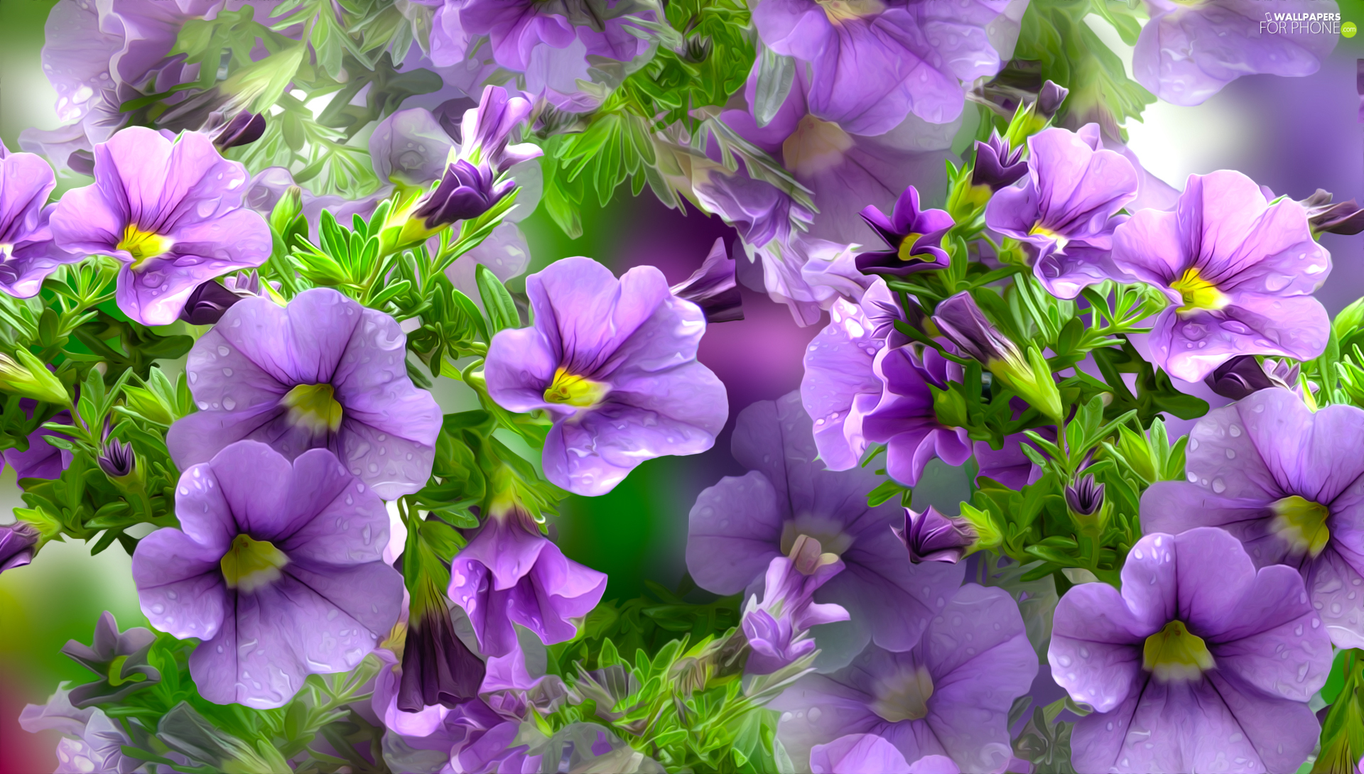 purple, petunias, graphics, Flowers