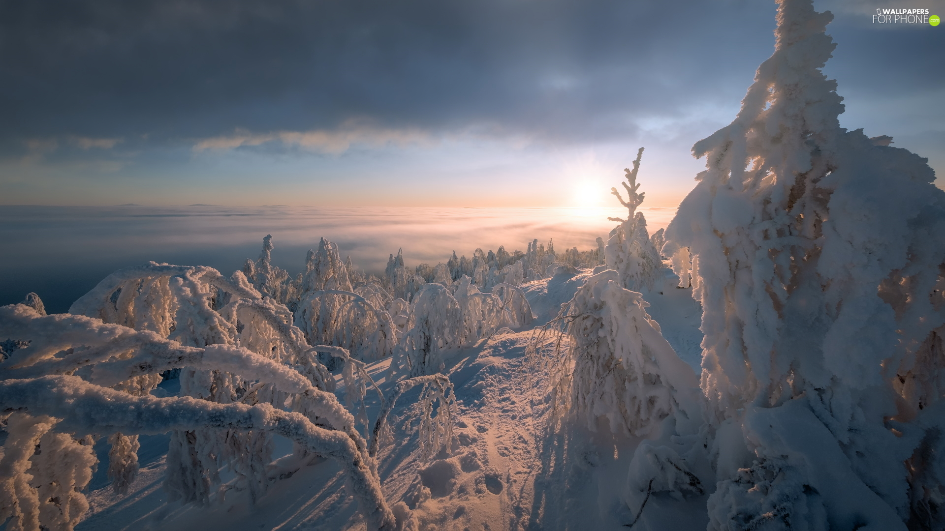 trees, winter, Sunrise, Fog, viewes, Snowy