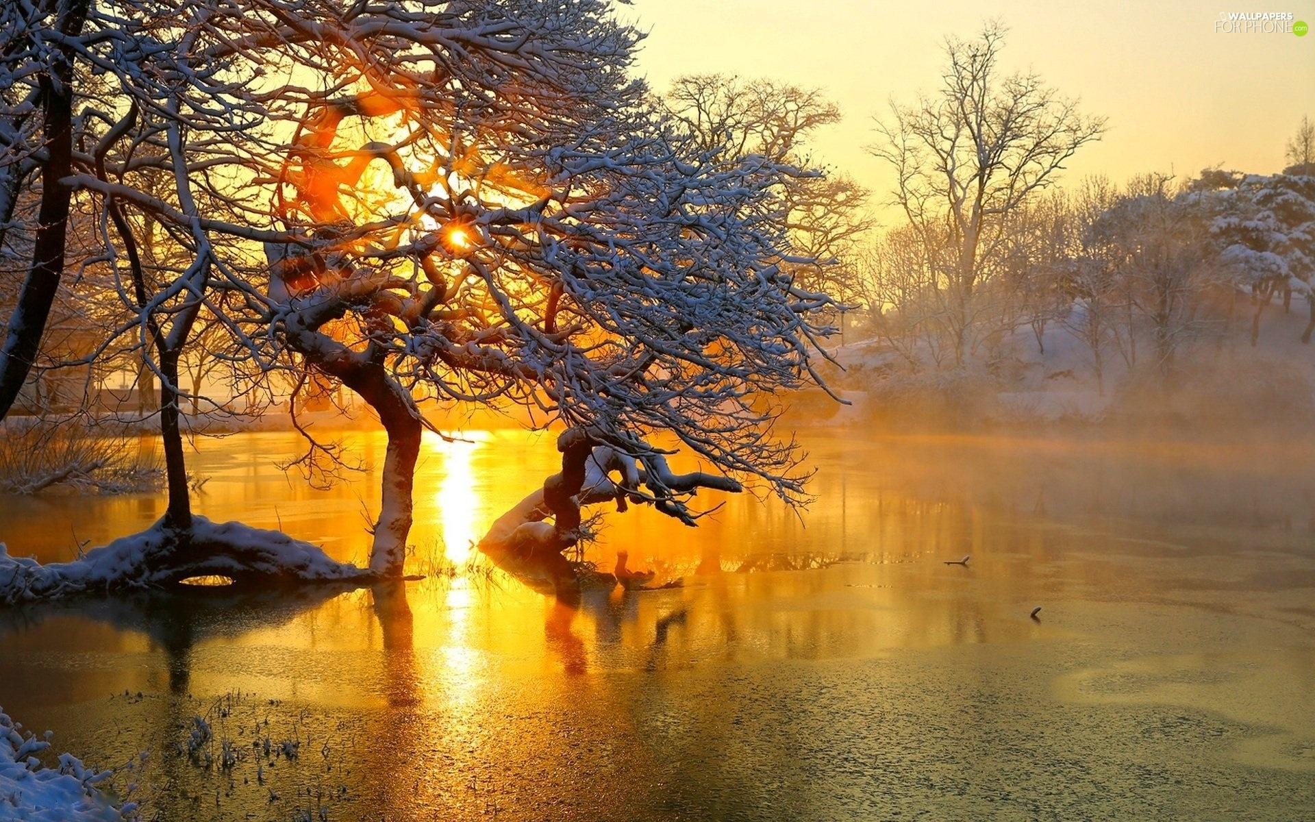 viewes, River, west, trees, winter, Fog, sun
